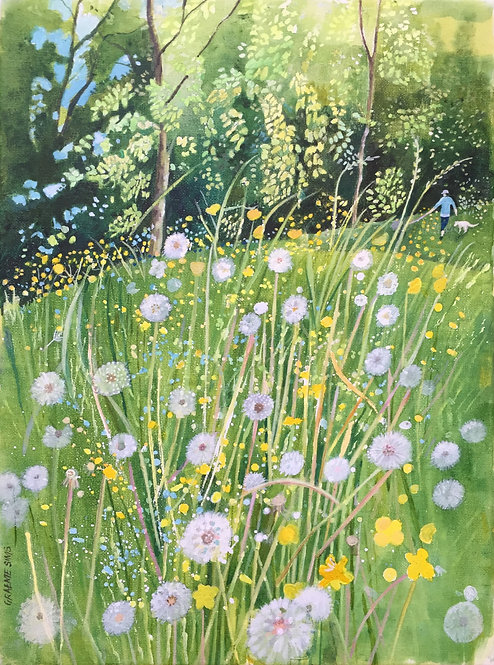 Dandelions in the foreground, a green slope leads up to lush green trees and a woman with her white dog walking there