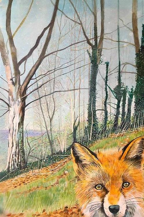 The glimpsed fox