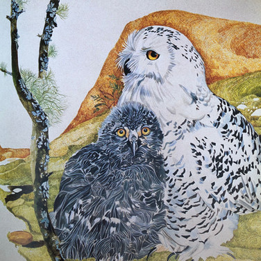 Snowly owl and chick