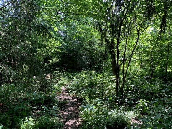 Montford backyard with path.jpg