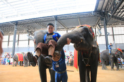 ELEPHANT SHOW IN NONG NOOCH VILLAGE