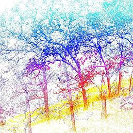 ForestEcology.jpg