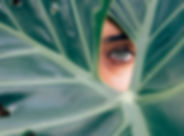 Peeping Through a Leaf