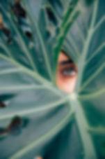 Peeping attraverso una foglia