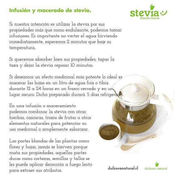 Infusión y macerado de stevia