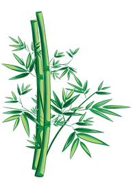 bamboo (2).png
