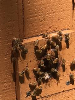 Bee Art found near Bees