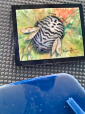 Zebra Bee Hard Clue