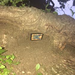 Browndale Park Tree Root