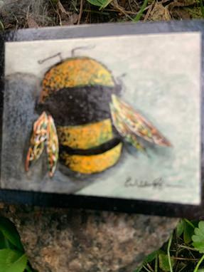 Night Bee Hard Clue