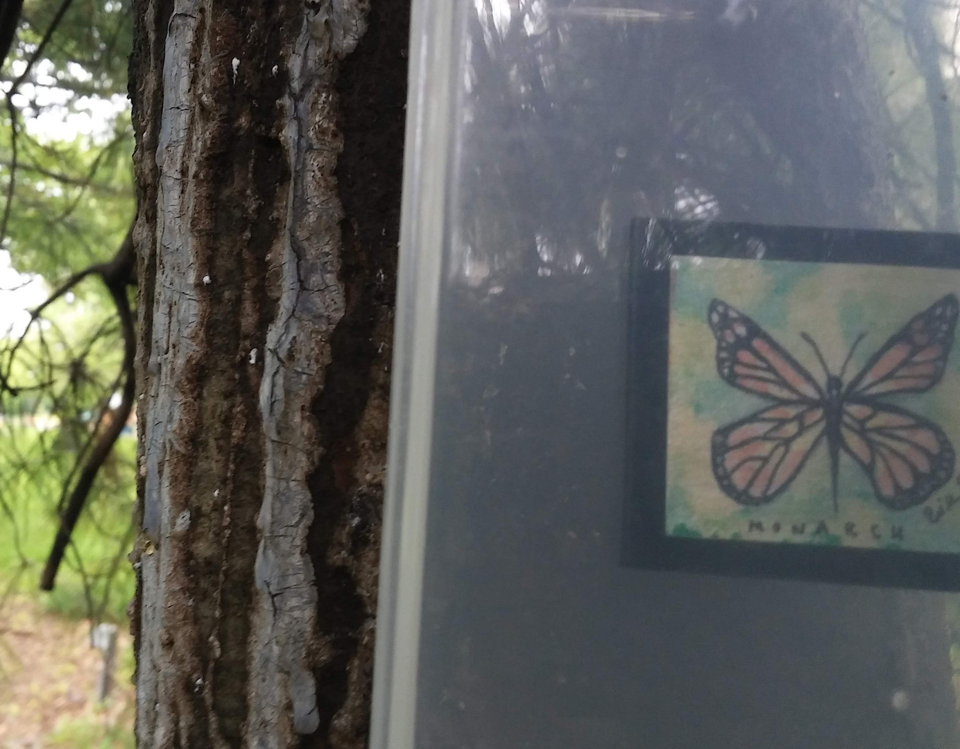 Monarch Found: Medium Clue
