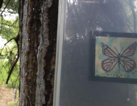 Monarch Found: Medium Clue