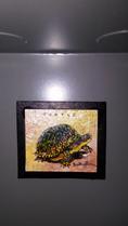 Turtle Found: Unreleased Hard Clue