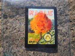 Maple 1HARD.jpg