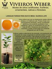 Newsletter Viveiros - 09.jpg