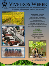 Newsletter Viveiros - 32.jpg