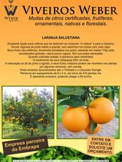 Newsletter Viveiros - 22.jpg
