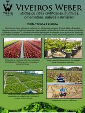 Newsletter Viveiros - 26.jpg