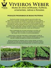 Newsletter Viveiros - 17.jpg