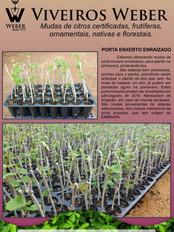 Newsletter Viveiros - 19.jpg