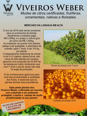 Newsletter Viveiros - 08.jpg