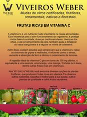 Newsletter Viveiros - 04.jpg