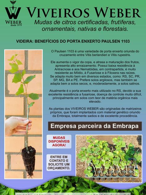 Newsletter Viveiros - 20.jpg