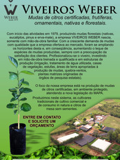 Newsletter Viveiros - 1.jpg