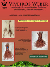 Newsletter Viveiros - 27.jpg