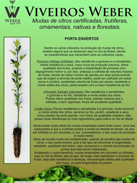 Newsletter Viveiros - 11.jpg