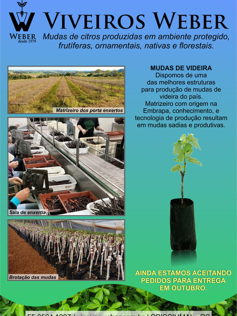 Newsletter Viveiros - 28.jpg