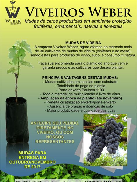 Newsletter Viveiros - 13.jpg