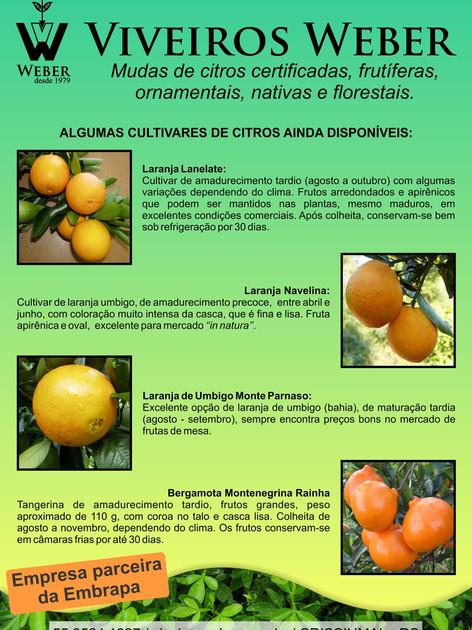 Newsletter Viveiros - 24.jpg