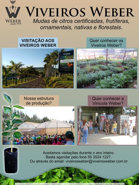 Newsletter Viveiros - 10.jpg