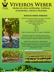 Newsletter Viveiros - 29.jpg