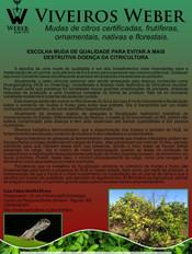 Newsletter Viveiros - 18.jpg