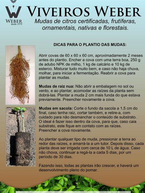 Newsletter Viveiros - 03.jpg