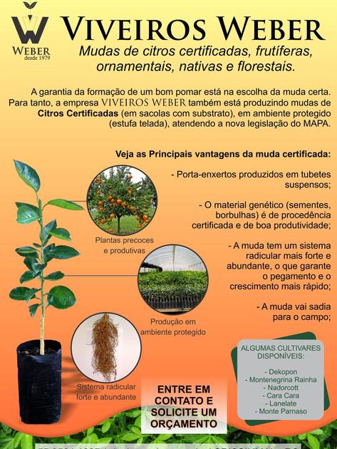 Newsletter Viveiros - 2.jpg