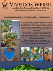 Newsletter Viveiros - 06.jpg