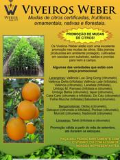 Newsletter Viveiros - 07.jpg