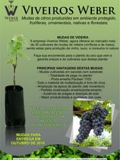 Newsletter Viveiros - 05.jpg