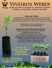 Newsletter Viveiros - 23.jpg