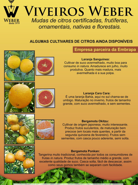 Newsletter Viveiros - 15.jpg