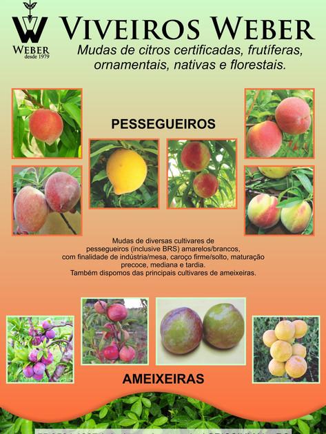 Newsletter Viveiros - 25.jpg