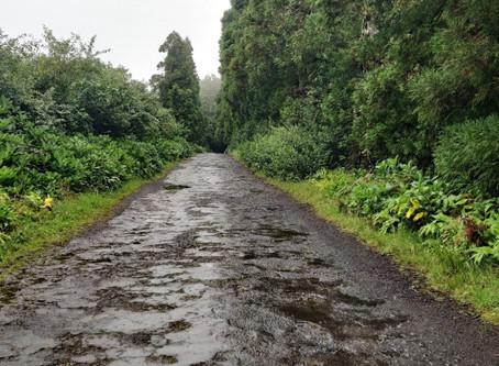 Regionais: CDS Faial exige a reabilitação da estrada do mato (Casa da Batata - Ribeira Funda)