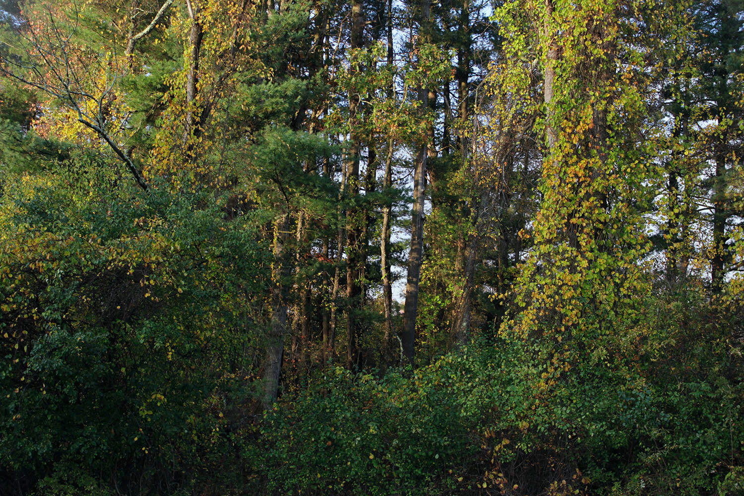 02_res108_forestS.jpg
