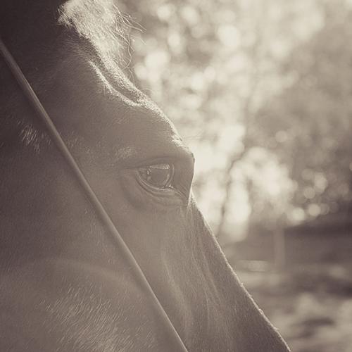 UGA Horse Owner Seminar