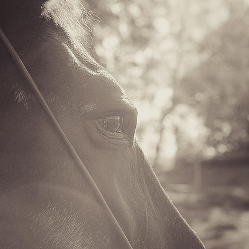 2017 Horse Owner Seminar
