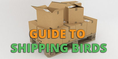 guide-to-shipping-birds-featured-840x420