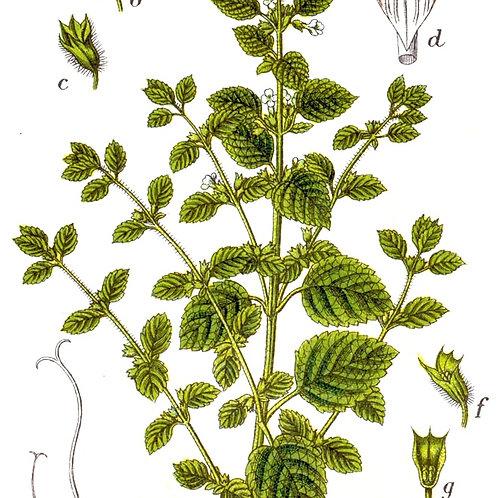 Lemon Balm Herb Box